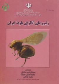 زنبورهای گالزای بلوط ایران